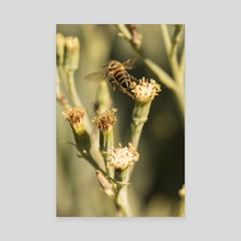 One Giant Leap - Canvas by Eye Spy Nature