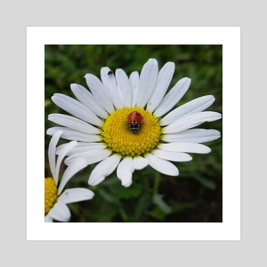 Daisy Bug by Ashley Gedz