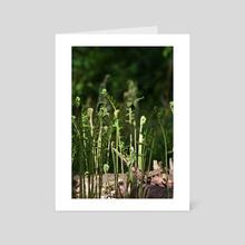 Ferns - Art Card by Ashley Gedz