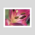 Vibrant Flower - Art Print by Eye Spy Nature
