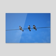 Tree Swallows on a Wire - Acrylic by Melissa Kelley