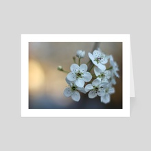 Spring Blossoms - Art Card by Carolynn Elwell