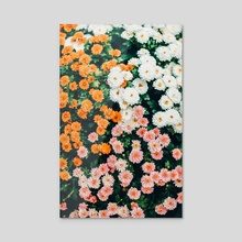 In My Garden - Acrylic by 83 Oranges