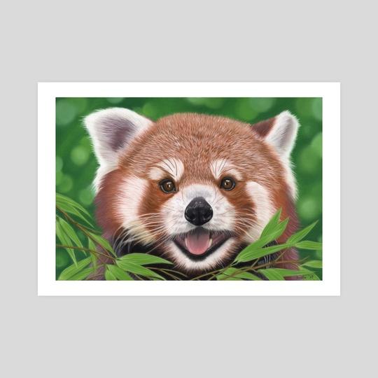 Red Panda Portrait 1 by Aurelia Chaintreuil