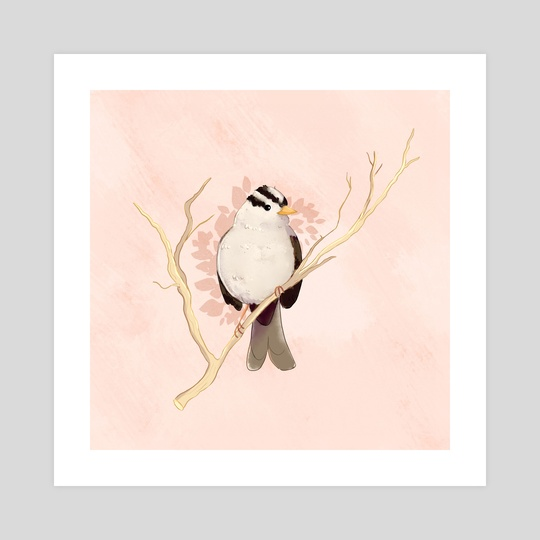 White-crowned Sparrow by Teagan Beemer