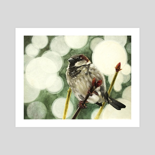 House Sparrow by Tom Schmitt