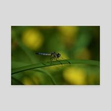 Dragonfly III - Canvas by Ashley Gedz