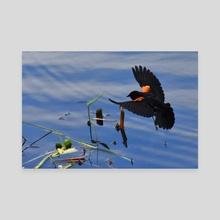 Red-winged Blackbird #1 - Canvas by Tim Ellis