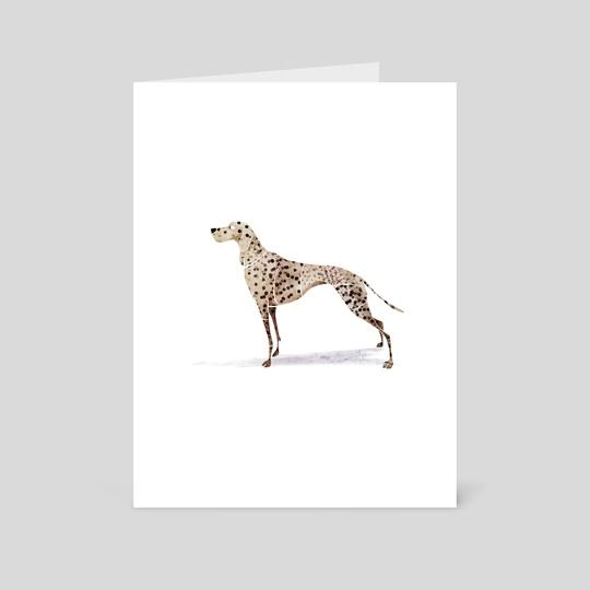 Dalmatian by ali saei
