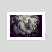 Cat - Art Card by Traven Milovich