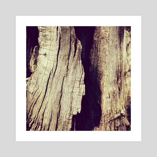 Weathered Bark, Sherwood by hinomaru