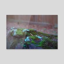 Mossy Rock - Acrylic by akbat