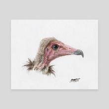 Bentley the Hooded vulture - Canvas by Emily Mortimer