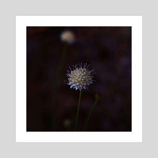 Wild flower 2 by Planimarium Art