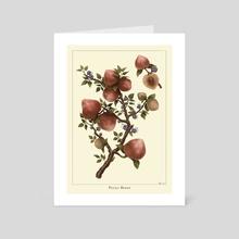 Botanical Illustration- Pecha Berry - Art Card by Faith Ong
