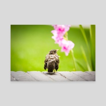 Baby Bird - Canvas by Rachel C