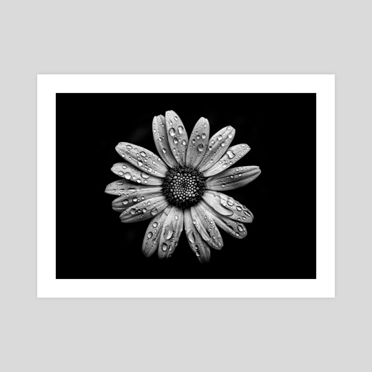 Backyard Flowers In Black And White 16 by Brian Carson