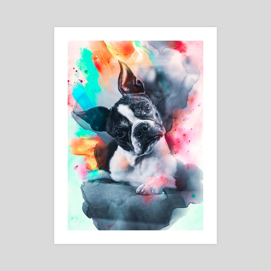 Boston Terrier by Visuals Artwork