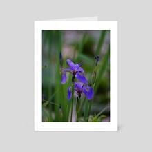 Wild Irises - Art Card by Ashley Gedz