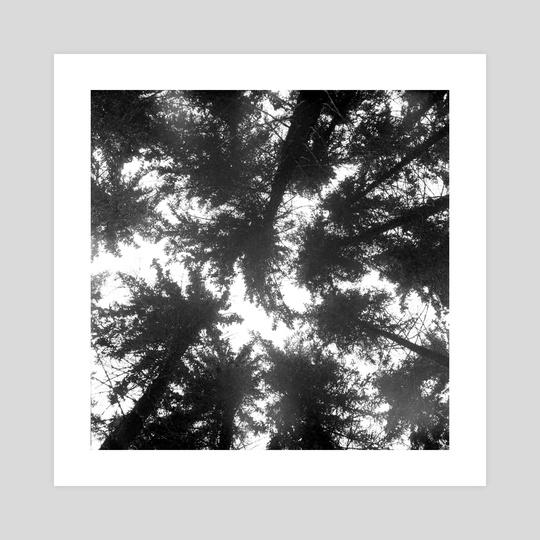 Pines by Aleksei Fedotov