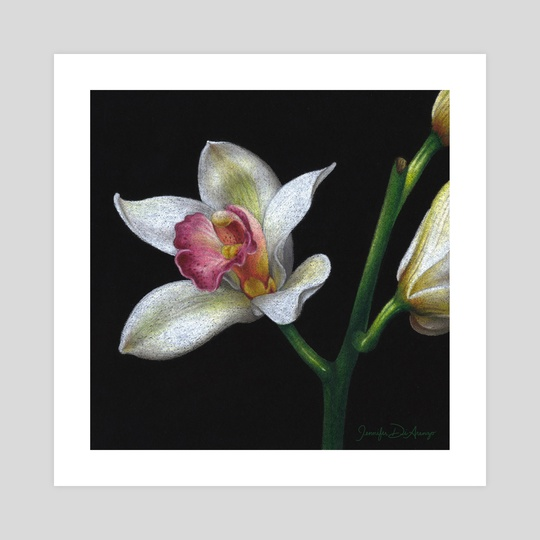 Orchid Blooms by Jennifer DiArenzo