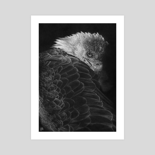 Bald Eagle by WickedIllusion
