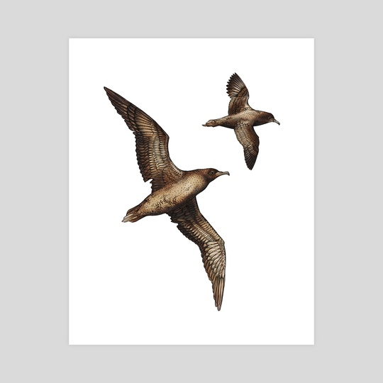 The Natural World - Sooty Shearwater by Emma Mallinen