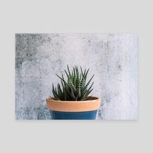 Zebra Plant - Striped Succulent - Canvas by Jennifer Walsh