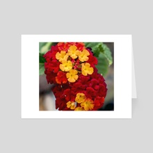 Lantana - Art Card by Tonia Denice