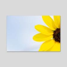 Prairie Sunflower - Acrylic by Martin Boehme