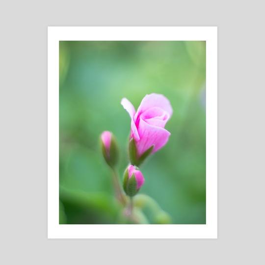Soft Flower by Ryan Weeks