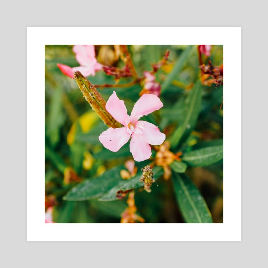 Tiny Flower by Nazar Hrabovyi