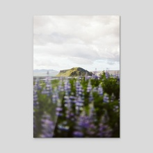 Icelandic Flowers Pt 2 - Acrylic by Jason Satterfield
