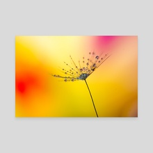Dandelion - Canvas by Filip Șerban