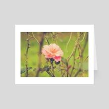 Through the garden - Art Card by Chiara Cattaruzzi