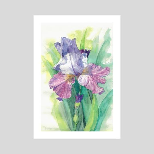 Iris by Julia