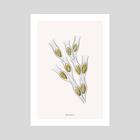 Dinobryon - Art Print by Dorothy Yan