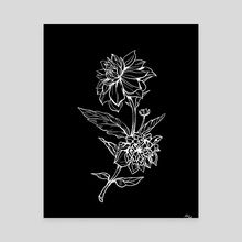 Black Dahlia - Canvas by Kate Trish