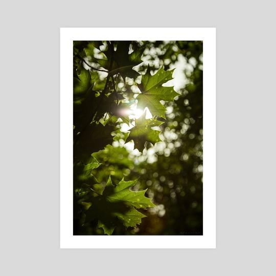 Light through the leaves. by Vitali Pikalevsky
