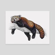 Red Panda - Canvas by Zanna Field