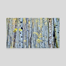 White Aspens - Canvas by Aaron Markowitz
