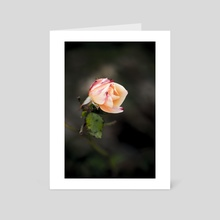 Rosebud - Art Card by Chiara Cattaruzzi