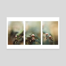 3 Mushrooms in 1  - Canvas by Eirik