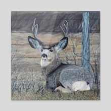 Mule Deer in the Brush - Acrylic by Brian Sloan