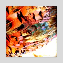 Pheasant Feathers - Canvas by Milly Scarborough-Taylor