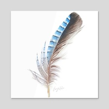 Blue Feather Drawing - Acrylic by Emmy Kalia