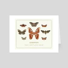 Lepidoptera Specimen Sheet - Art Card by Katlyn Griffin