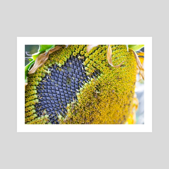 Untitled (Sunflower up close, brighter) by Kristin Elsen