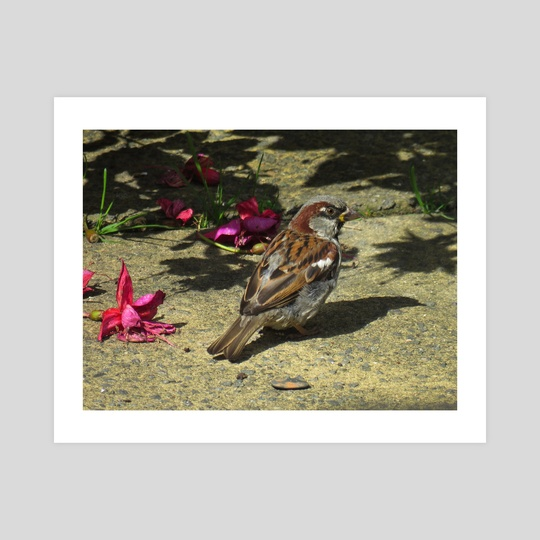 House sparrow amongst summer flowers by Eve King
