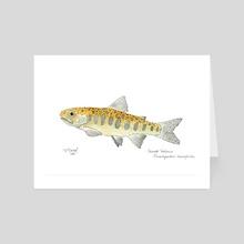 Chinook Salmon Smolt - Art Card by Sarah Baird